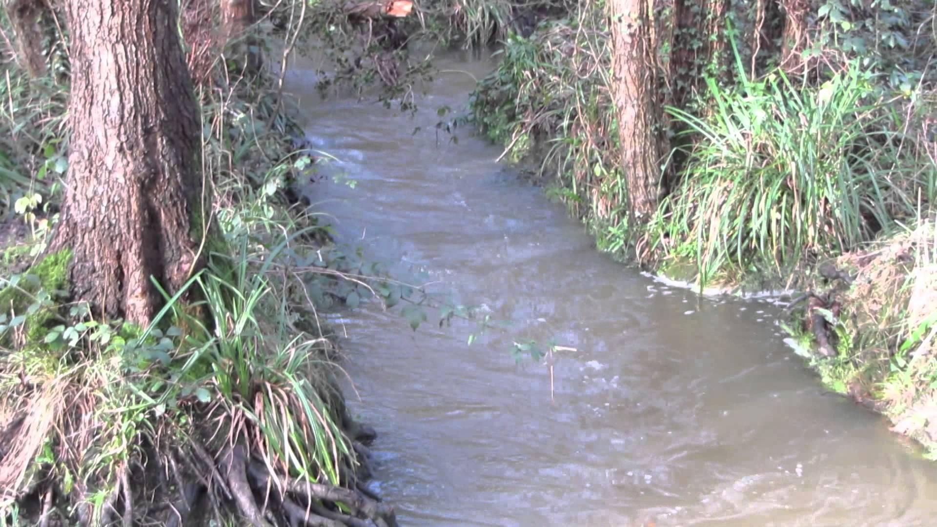 waterlooville hermitage stream